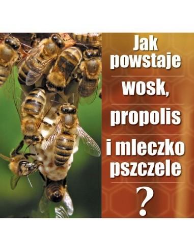 "Ulotka ""Jak powstaje wosk"" – 20 szt."