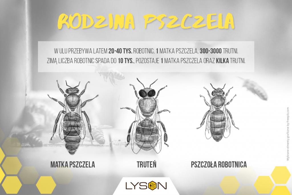 Rodzina pszczela - rodzaje pszczół