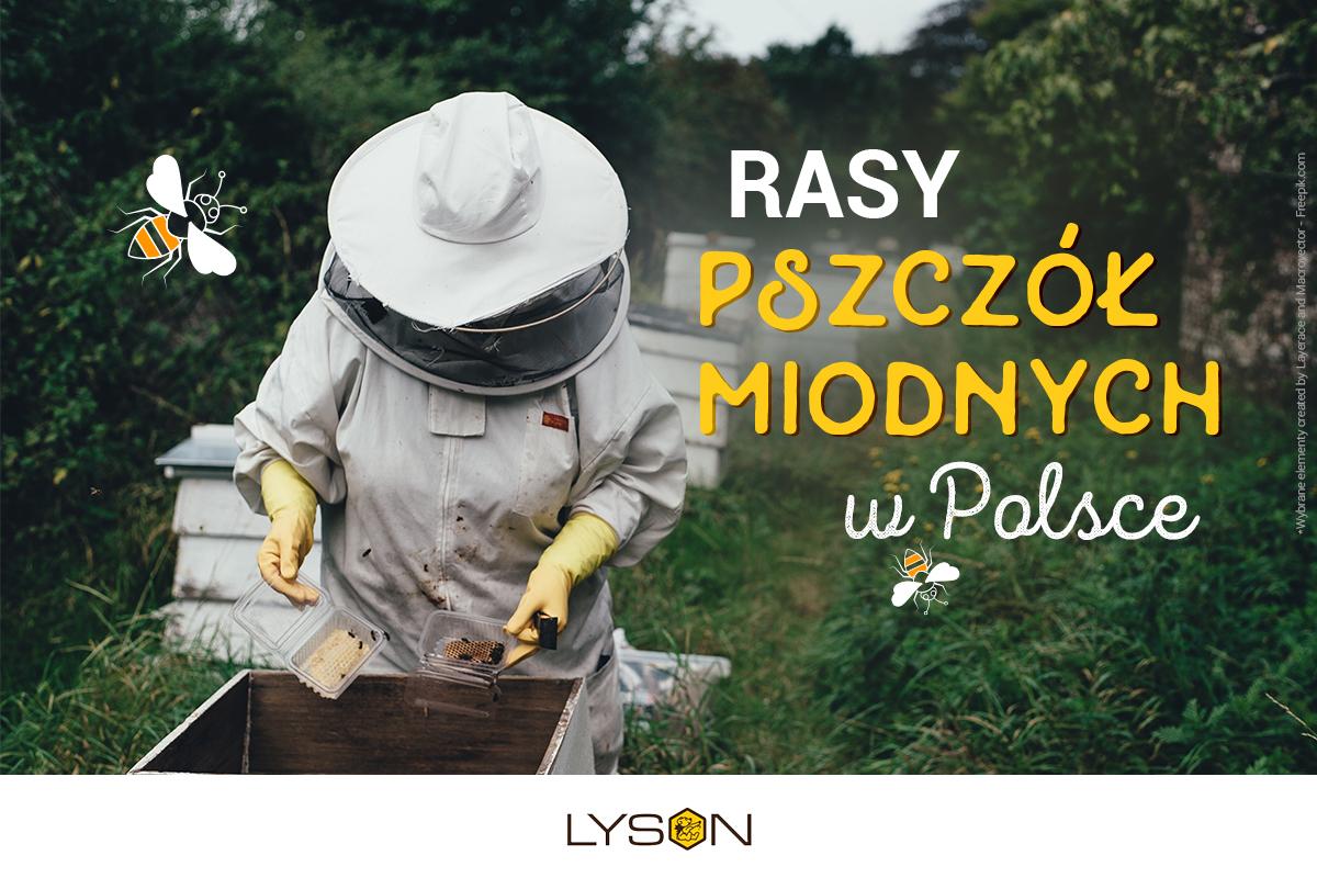 Rasy pszczół miodnych w Polsce