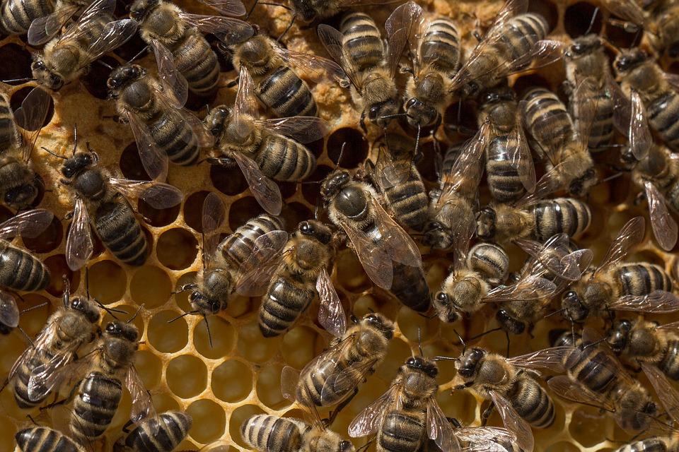 Królowa pszczela