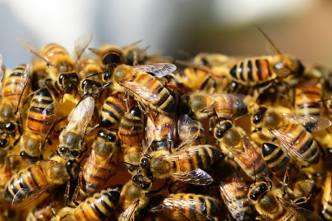 Pszczoły na cieście