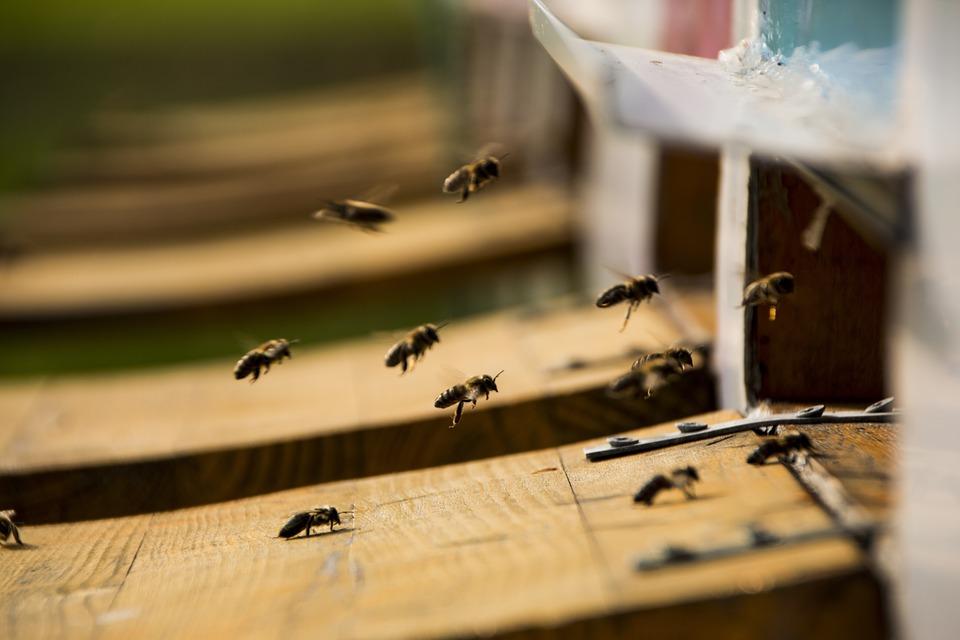 Pszczoły wiosną