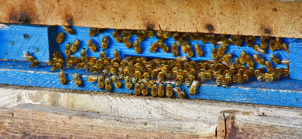 Pszczoły na wlotku