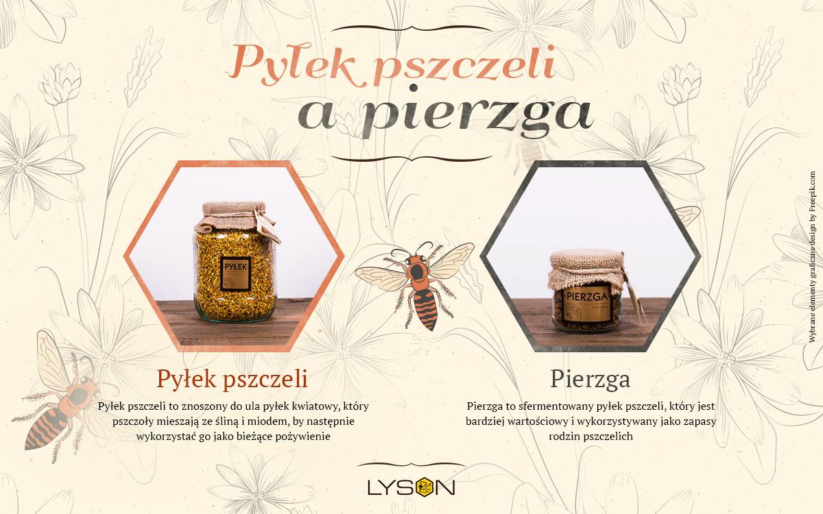 Pyłek pszczeli a pierzga