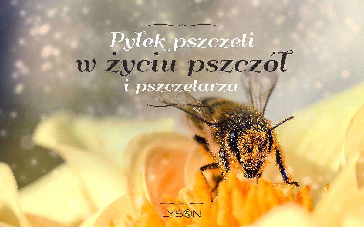 Pyłek pszczeli w życiu pszczół i pszczelarza