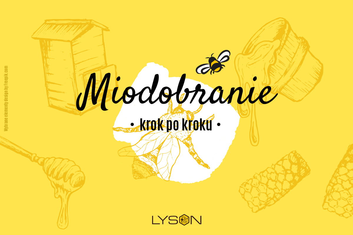 Miodobranie - krok po kroku
