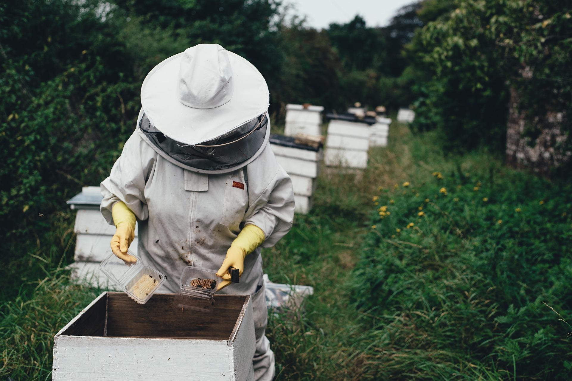 Prace przy pszczołach