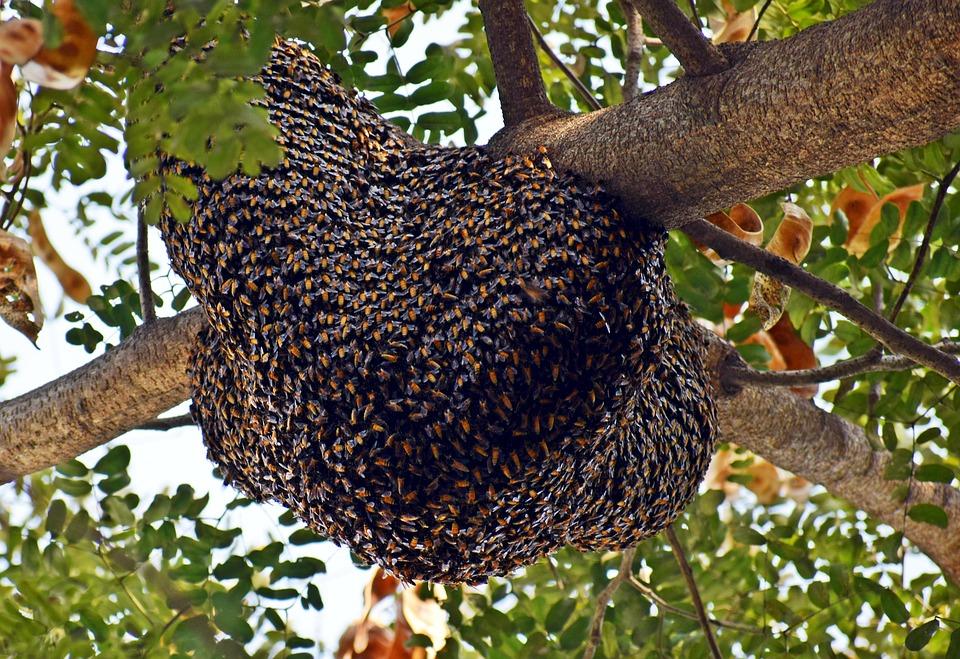 Rój pszczół