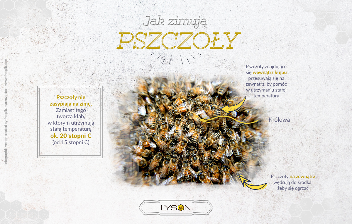 Jak zimują pszczoły?